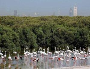 Дубайский заповедник для фламинго