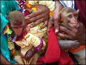 """В Индии прошла """"религиозная церемония бракосочетания"""" идолов-обезьян"""