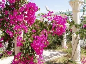 Коранические ботанические сады появятся в Катаре и ОАЭ