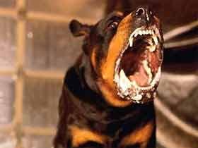 Таджика затравили собаками, после чего жестоко избили