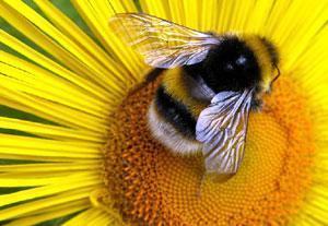 Сербские пчеловоды приобщают пчел к православию