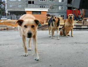 Стая бродячих собак загрызла мужчину в Измайловском парке