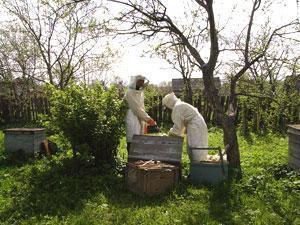 Будущие имамы освоят профессию пчеловода