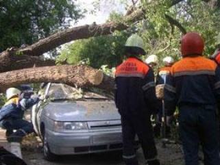 Ураган повалил сотни деревьев. Метеоцентр рекомендует воздержаться от поездок на автомобиле