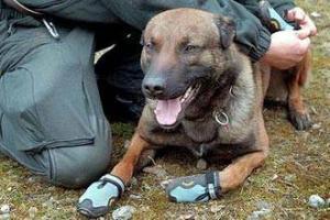 В Британии мусульман будут обыскивать обутые собаки