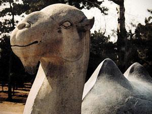В Эмиратах найдены останки древних верблюдов