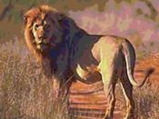 В Татарстане из частного владения сбежал лев, он переплыл Каму и направился вглубь республики
