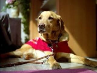 В Британии собакам разрешили заходить в мечеть