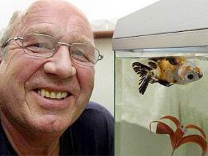 Аквариумная рыбка пять лет плавает кверху брюхом