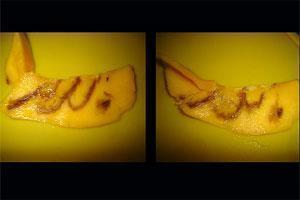"Разрезанный плод манго, на котором отчетливо видно слово ""Аллах"", написанное по-арабски"