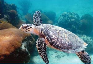Мусульман призовут заботиться о черепахах