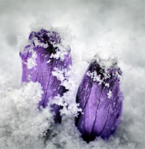 """Метеорологи пообещали """"весну"""" в декабре"""