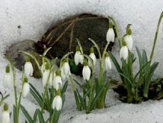 Метеобюро: зимы не будет!