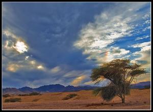 В ОАЭ прошел всеобщий молебен о ниспослании дождя
