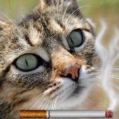 Готовы ли вы бросить курить ради любимого питомца?