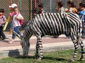 В зоопарке Газы появились фальшивые зебры