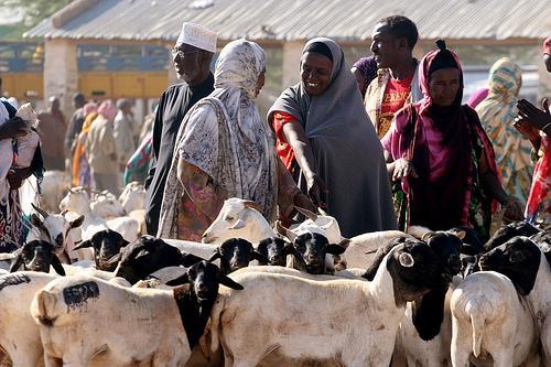На Курбан-байрам в Саудовской Аравии будут резать сомалилендских баранов
