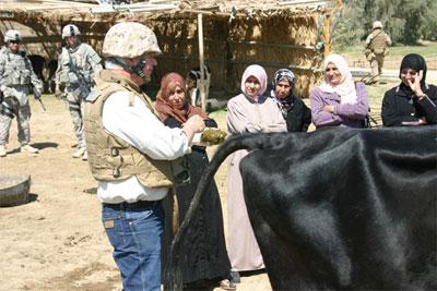 """Коровы для """"борьбы с терроризмом"""" в Фаллудже"""