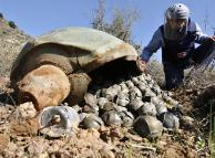 Крупнейшие производители кассетных боеприпасов отказываются их запрещать