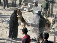 Израильские военные учат собак нападать на мусульман