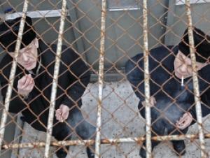 Ограничения свободы разгрузит российские тюрьмы и загрузит работников ФСИН