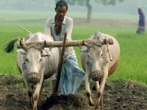 Бенгальский крестьянин. Фото: Аль-Джазира