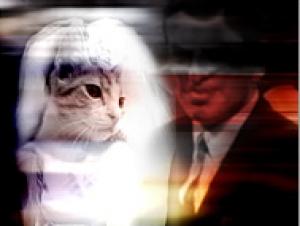 Немец женился на кошке