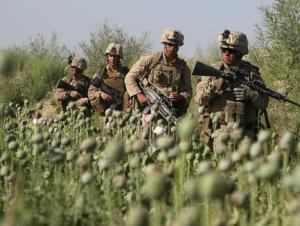 Европа, Россия и Иран потребляют более 80% афганских наркотиков
