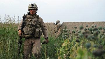 ООН: В Афганистане выросло число наркоманов