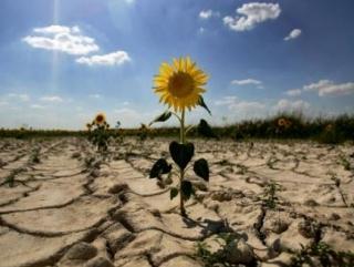 Засуха загубила урожай озимых в Татарстане