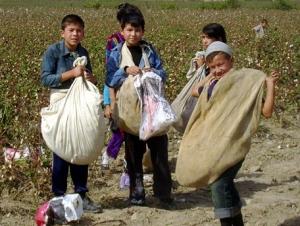 В Таджикистане урожай хлопка вновь собран при помощи детей