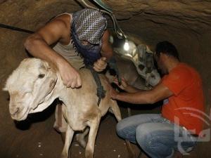 Палестинские мусульмане празднуют Ид аль-Адха