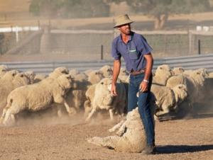 Австралия экспортировала для празднования Курбан-Байрама около 1 млн. овец