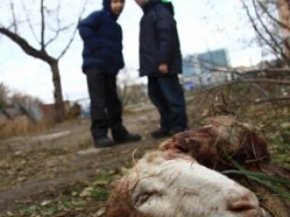 Что делают останки животных в центре Казани?