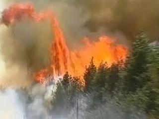 Израиль запросил помощи из-за лесного пожара