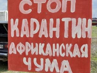 Южной Осетии не хватает средств для борьбы с африканской чумой свиней