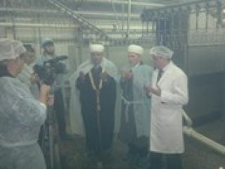 В Нижнем Новгороде начали проиводство халяльных кур