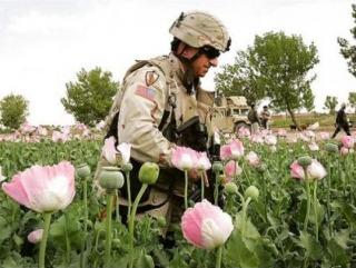 Россия и Иран будут совместно противостоять наркоугрозе из Афганистана