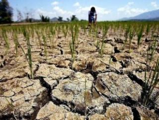 А.Ивушкин:  Изменение климата может пробудить эрозионные процессы, которые приведут к нарушению экологической ниши имеющегося ландшафта в Пензенской области