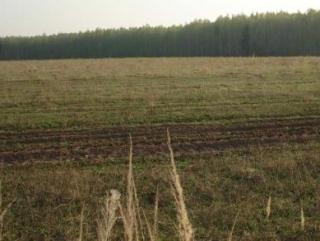 В России у владельцев сельхозугодий отнимут земли, не обрабатываемые более 3-х лет