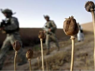 Деятельность НАТО способствовала росту наркопроизводства в Афганистане — глава ФСКН