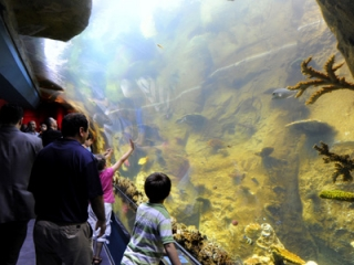 Жители Стамбула проявили огромный интерес к аквариуму, но больше всего открытие аквариума обрадовало детей