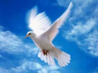 В небо взмыли 114 голубей в память о жертвах «Булгарии»