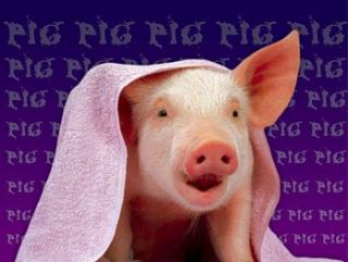 О свинье, религии и не только