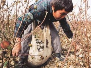 Мировые текстильные компании бойкотируют узбекский хлопок