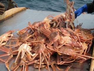 В Охотском море задержаны браконьеры под флагом Грузии
