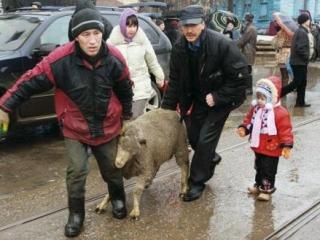 Кадыров подарил малоимущим 7 тысяч жертвенных баранов