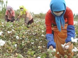 Хлопкоробы Туркменистана взбунтовались