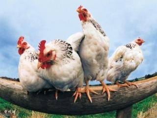 Мясо халяль по-деревенски: доступно и без посредников