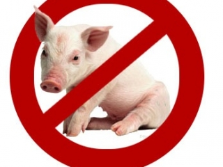 Свинья неразборчива в пище и нечистоплотна в целом